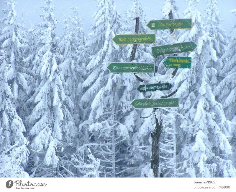wegweisend schön Baum Winter Wald kalt Schnee Landschaft Eis Frost Richtung Wegweiser