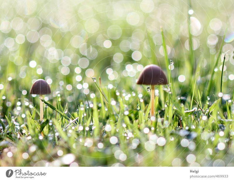 Herbstmorgen... Natur grün weiß Pflanze Umwelt Gras klein natürlich außergewöhnlich Garten Stimmung braun glänzend stehen Wachstum