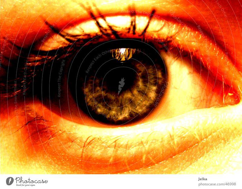 I Frau Erwachsene Auge blau Wimpern Pupille eye eyes eyelash lashes eyelashes ciliary woman Regenbogenhaut blue Farbfoto