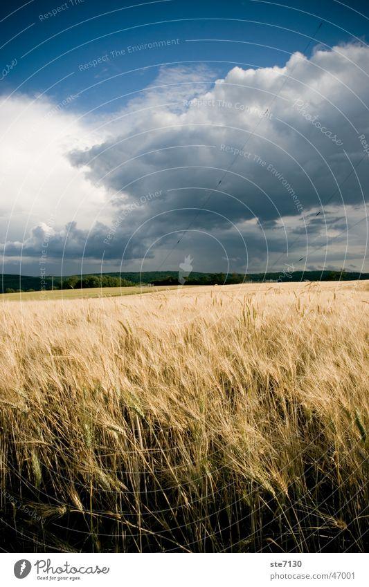 Felder um Mühlacker Weizen Stimmung Wolken Europa Außenaufnahme Weitwinkel Himmel blau Wind Natur Deutschland Blauer Himmel durchwachsener himmel