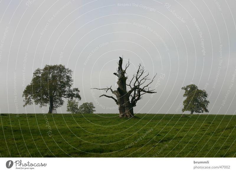 Toter Baum mit alten Freunden Natur alt Baum grün Blatt Wald Herbst Wiese Tod Holz Traurigkeit Park Landschaft Umwelt Vergänglichkeit Weide