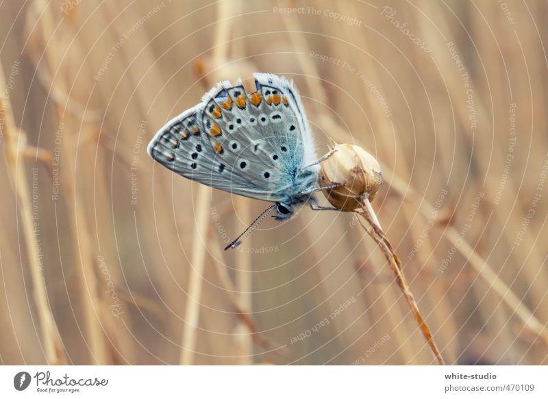 Traktion blau schön Einsamkeit Wärme Liebe Erotik Frühling braun fliegen Behaarung elegant Zufriedenheit sitzen Fliege Orange Lebensfreude