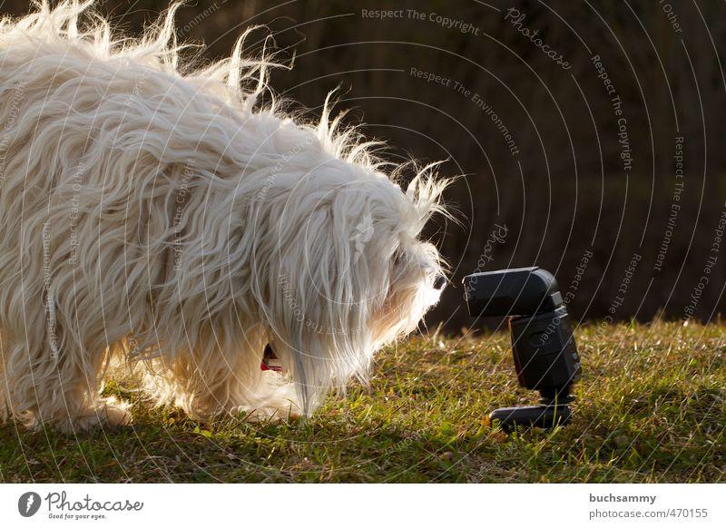 Zu Nah am Blitz Hund grün weiß Tier Wärme Wiese Neugier Fell Haustier langhaarig Schnauze vorwitzig Hundemarke