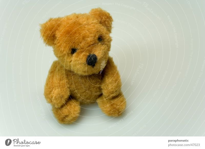 Mini-Teddy Einsamkeit schwarz Auge Tier Beine klein braun Arme Nase schlafen Stoff Ohr Spielzeug Fell erleuchten kuschlig