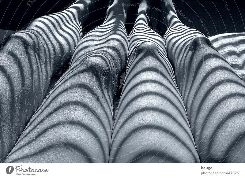 Zwei Zebras Beine Haut Bett Streifen Schlafzimmer