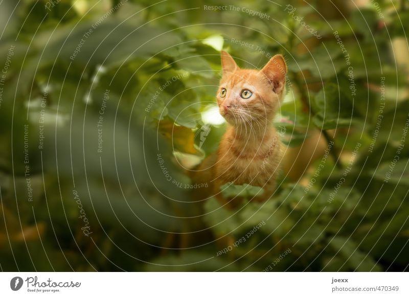 Nimm mich mit! Sträucher Tier Haustier Katze 1 Tierjunges Blick sitzen Schutz Geborgenheit Tierliebe Farbfoto Gedeckte Farben Außenaufnahme Nahaufnahme