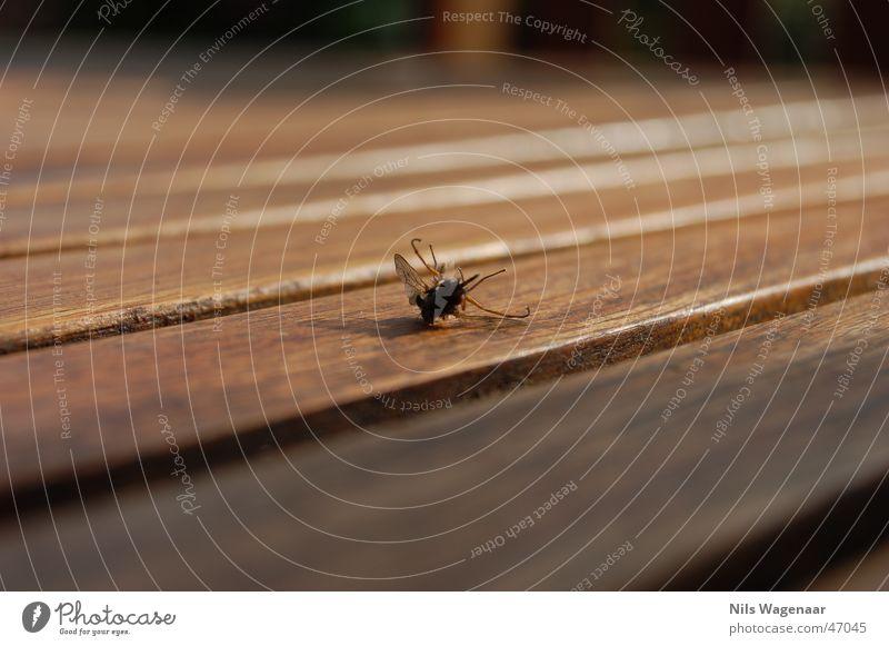 Sauerei! denn tut nichh mehrrrr! Sommer Tier Wiese Herbst Fliege Tisch Holz Teak