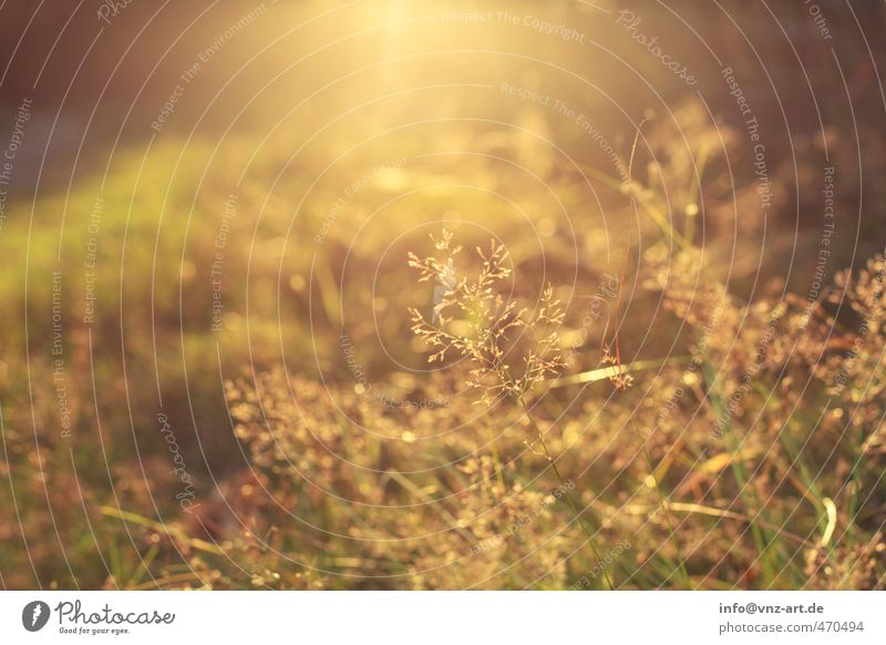 Warm Natur Pflanze Sonne gelb Umwelt Wiese Gefühle Herbst Gras Garten Stimmung Wetter Park gold Sträucher Schönes Wetter
