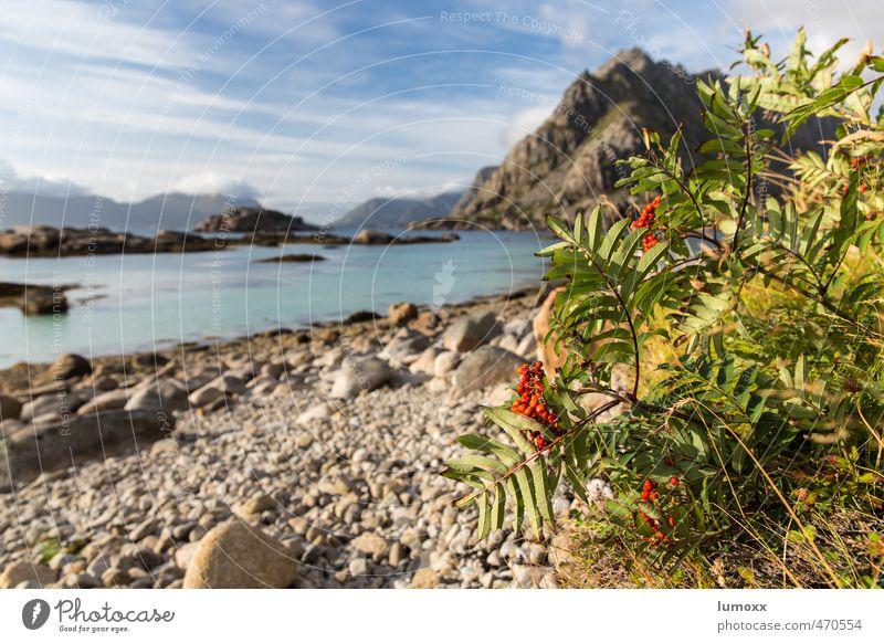 nordic islands Wasser Pflanze Sommer Meer Landschaft Wolken Strand Umwelt Küste Felsen Idylle Tourismus Sträucher Europa Schönes Wetter Insel