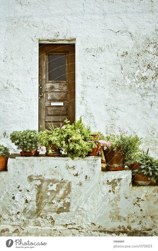heimelig Haus Einfamilienhaus Bauwerk Gebäude Architektur Mauer Wand Treppe Fassade Garten Tür grün Blumentopf Topfpflanze Eingang Putz Putzfassade Gärtner