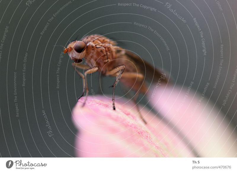 Insekt Natur Tier ästhetisch Abenteuer einzigartig nah Selbstständigkeit