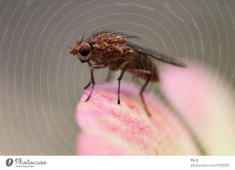 Insekt Natur Tier natürlich Wildtier authentisch ästhetisch Abenteuer