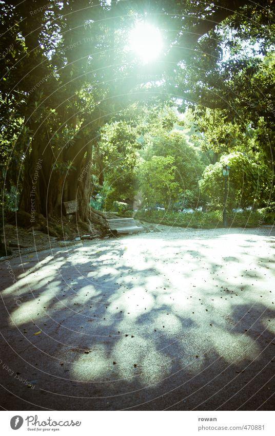 schattenwurf Natur Sonne Sonnenlicht Sommer Baum Blatt Garten Park Wärme Erholung Bank alt groß Blätterdach Idylle ruhig Pause Farbfoto Außenaufnahme