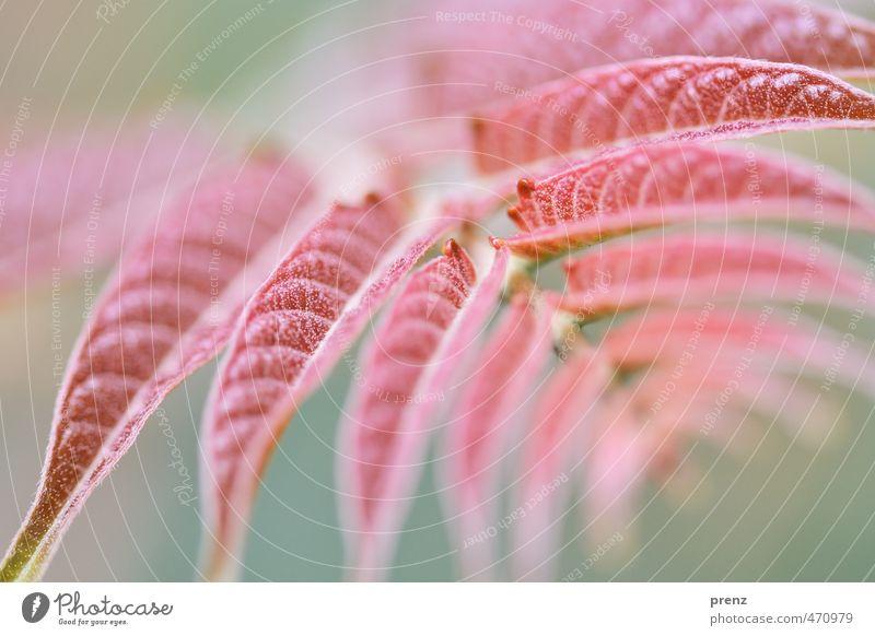 Flora Natur grün Pflanze Sommer rot Blatt Umwelt Perspektive Schönes Wetter Zweig Wildpflanze