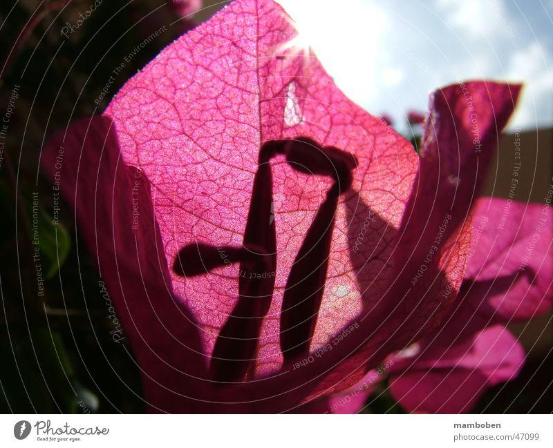 Die Blume Sonne Pflanze Sommer Blatt glänzend