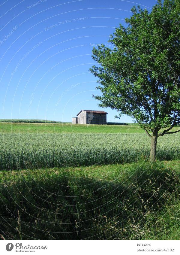 Ein Schuppen 2 Scheune Feld Raps blau Sommer Himmel field blue sky grass