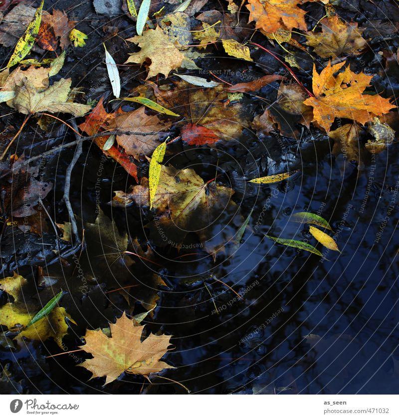 Herbstgemälde Natur alt grün Wasser weiß Pflanze Farbe rot schwarz gelb Holz natürlich braun orange dreckig