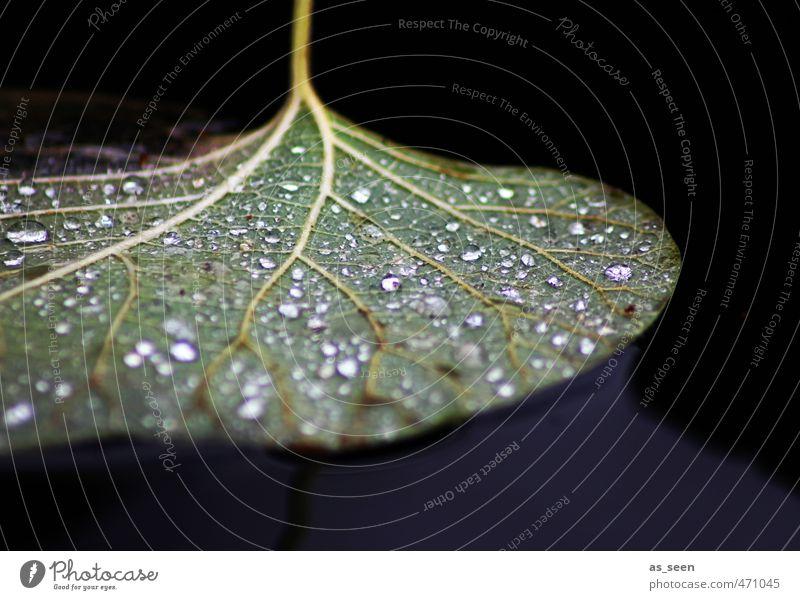 Tau Natur blau schön grün Wasser weiß Pflanze ruhig Blatt schwarz Umwelt Herbst Schwimmen & Baden Stimmung braun glänzend