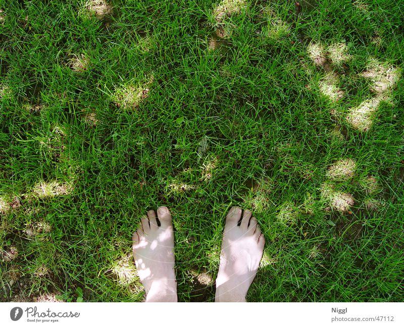 Barfuß Wiese grün Zehen Sommer Rasen Körperteile Fuß Schatten Mensch niggl