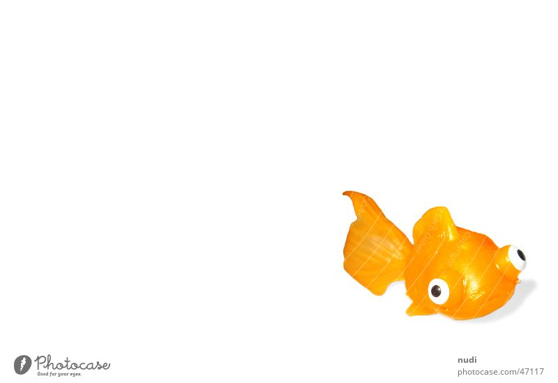 Blubber Spielzeug Tier Goldfisch Fisch orange Statue Auge Schwimmhilfe Schatten Wasser fish plastic eyes animal water Blubbern