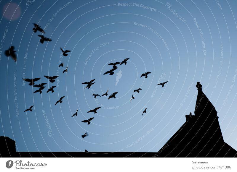 flying high Ausflug Städtereise Himmel Wolkenloser Himmel Kirche Bauwerk Gebäude Architektur Dach Tier Wildtier Vogel Taube Schwarm fliegen dunkel Sehnsucht