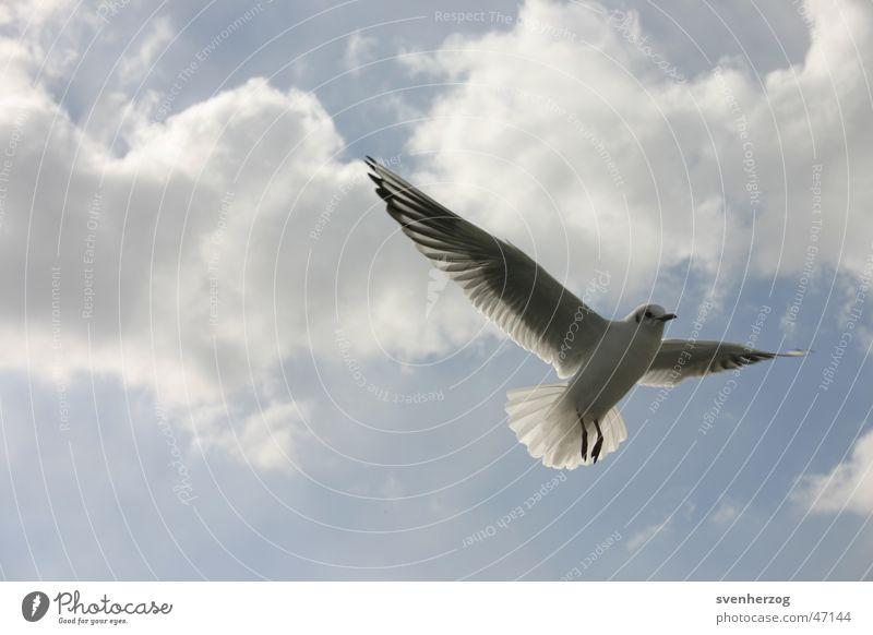 Moment mal... Himmel weiß blau oben Luft Hintergrundbild Flügel