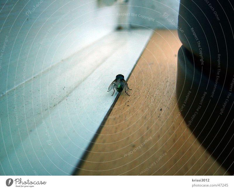 ich krieg dich noch Fensterbrett dreckig dunkel fangen Insekt Holz weiß braun schwarz Makroaufnahme Nahaufnahme Fliege hell Erde Flucht schwelle