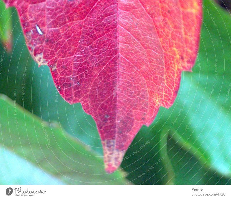Blatt Pflanze