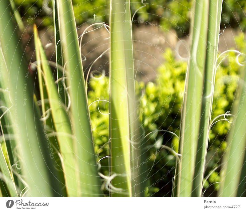 Pflanze Makroaufnahme