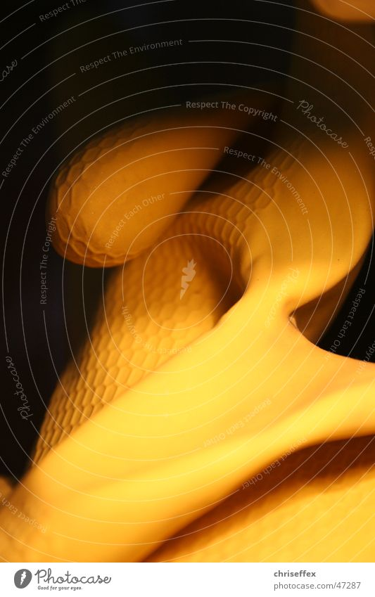 Gou-mi schwarz gelb Handschuhe Gummi