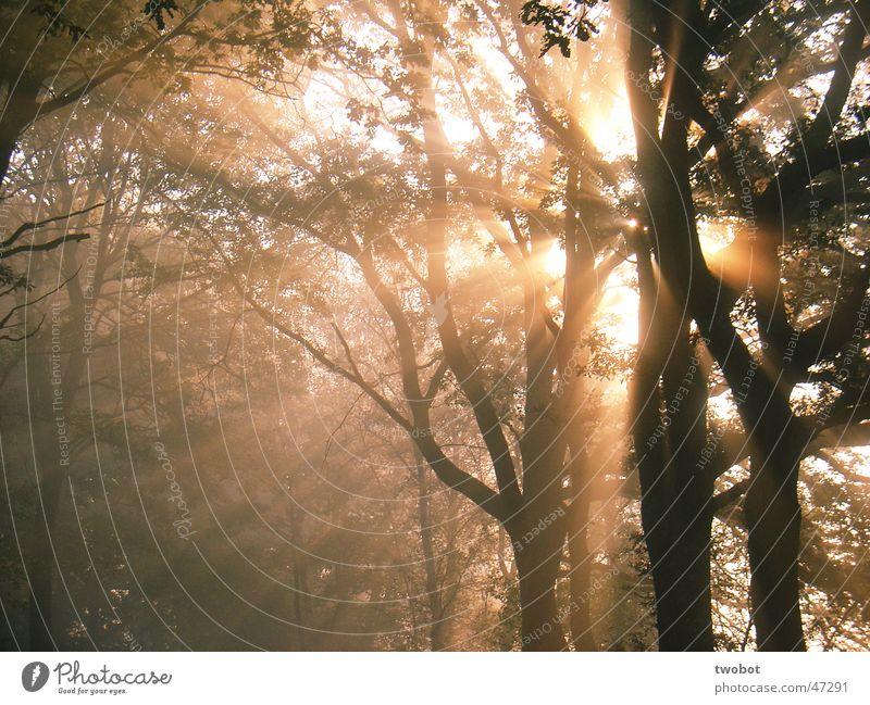 die sonne explodiert Sonne Baum Wald Nebel Sonnenaufgang Morgen Licht Herbst Erholung Explosion Natur Holzmehl Kraft Lichterscheinung Energiewirtschaft