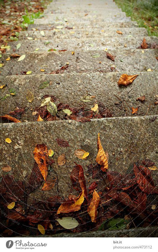erste Herbststufe Umwelt Natur Wind Sturm Garten Park Treppe fallen dehydrieren Traurigkeit Vergänglichkeit Wege & Pfade Blatt Herbstlaub herbstlich