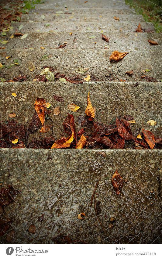 Blättertreppe Stadt Wasser ruhig Blatt kalt Umwelt Herbst grau Stein Linie Garten braun liegen Regen Treppe Klima