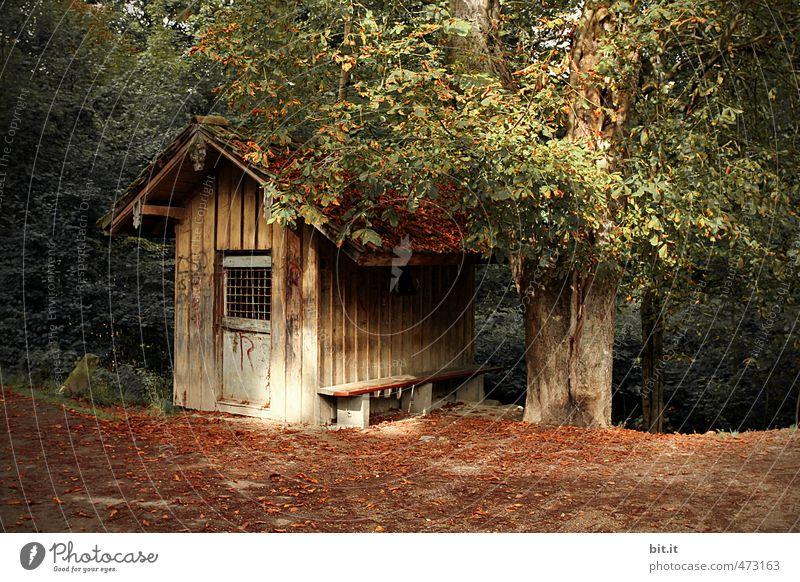 Plauschhütte Natur Ferien & Urlaub & Reisen alt grün Einsamkeit ruhig Haus Wald Herbst Wege & Pfade Gebäude klein Garten braun Idylle Ausflug