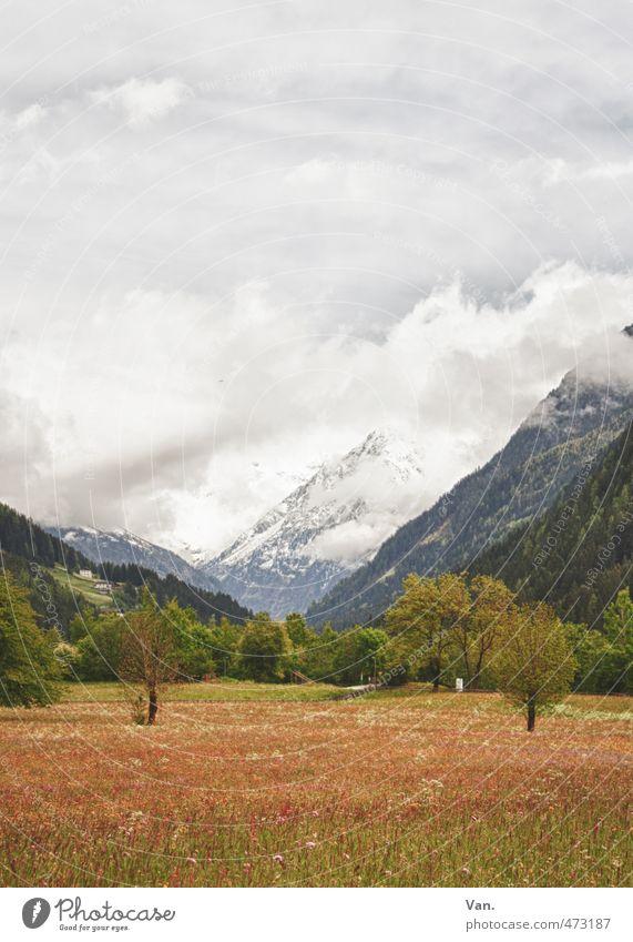 Bergfrühling Ferien & Urlaub & Reisen Berge u. Gebirge wandern Natur Landschaft Himmel Wolken Frühling Wetter Baum Blume Gras Wiese Felsen Alpen