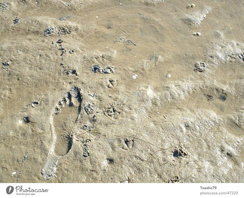 Wattenmeer vor Sylt Meer Ferien & Urlaub & Reisen Freiheit Fuß Sand Deutschland Europa Spuren Fußspur Nordsee Wattwandern Wattwürmer