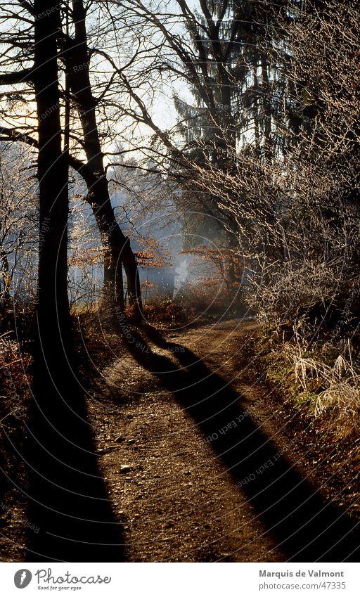 Auf der Schattenseite Baum Wald Nebel Fußweg Schotterweg Gegenlicht Winter Herbst Sträucher Geäst Wegrand Unterholz Stimmung Sonne Wege & Pfade kiesstrasse