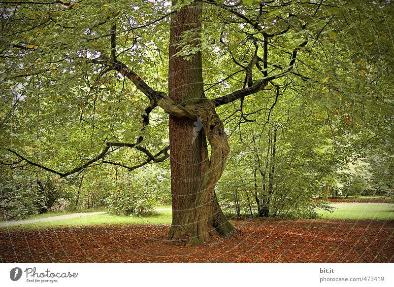 Yoga Baum harmonisch Erholung ruhig Meditation Umwelt Natur Urelemente Erde Garten Park Wald grün Vertrauen Einigkeit Sympathie Zusammensein trösten Weisheit