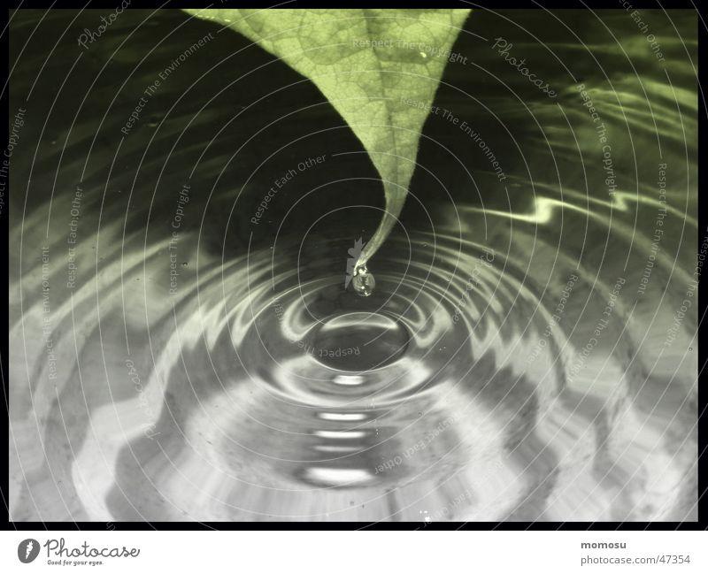 tears rolling down... Wasser Blatt Wassertropfen Kreis Mitte Tränen