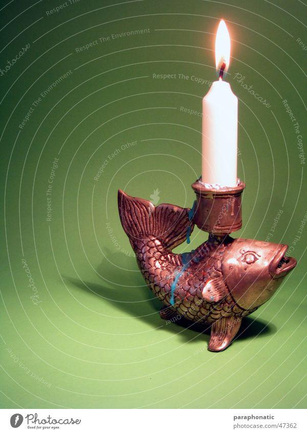 Fisch sucht Fahrrad - Das Candlelightdinner! grün Erholung Beleuchtung Metall Hintergrundbild Brand Fisch Kerze Tropfen brennen Festessen Flamme Abenddämmerung Einladung Wachs Mahlzeit