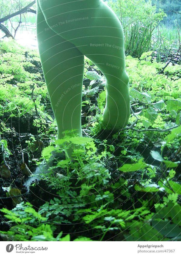- Pfadfinder - Frau Mensch Natur grün Pflanze Wald feminin Fuß Beine Strümpfe Hausschuhe Waldboden Feinstrümpfe Waldsee