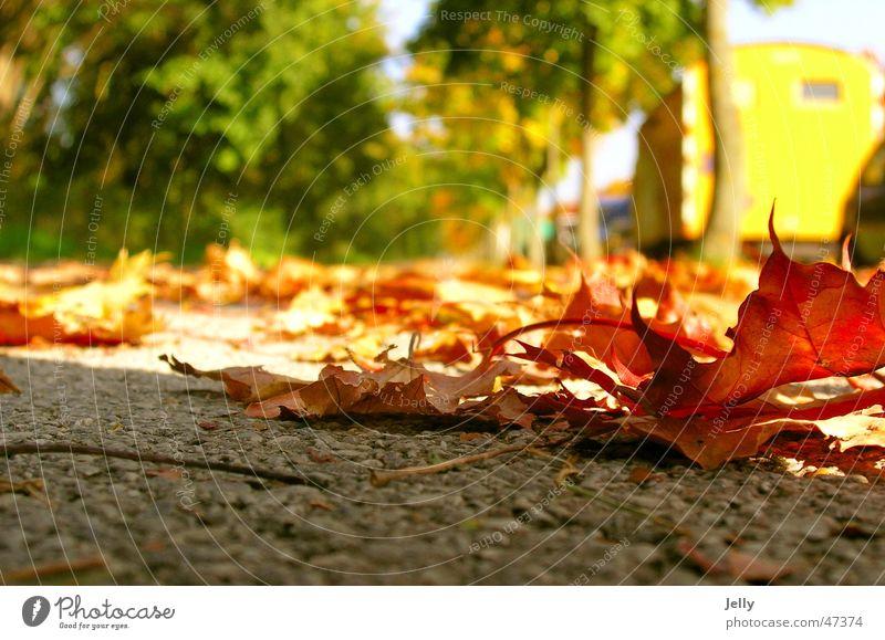 der herbst kommt rot grün gelb Unschärfe Blatt Asphalt Baum Allee Bürgersteig Spaziergang Bodenbelag Straße