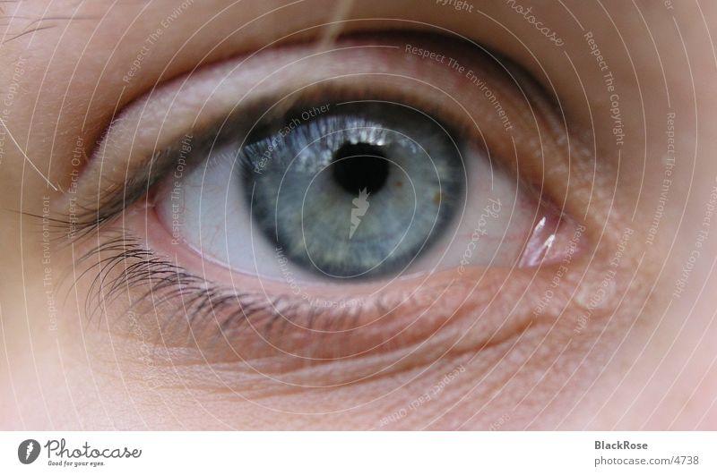 Auge Mensch blau Gesicht