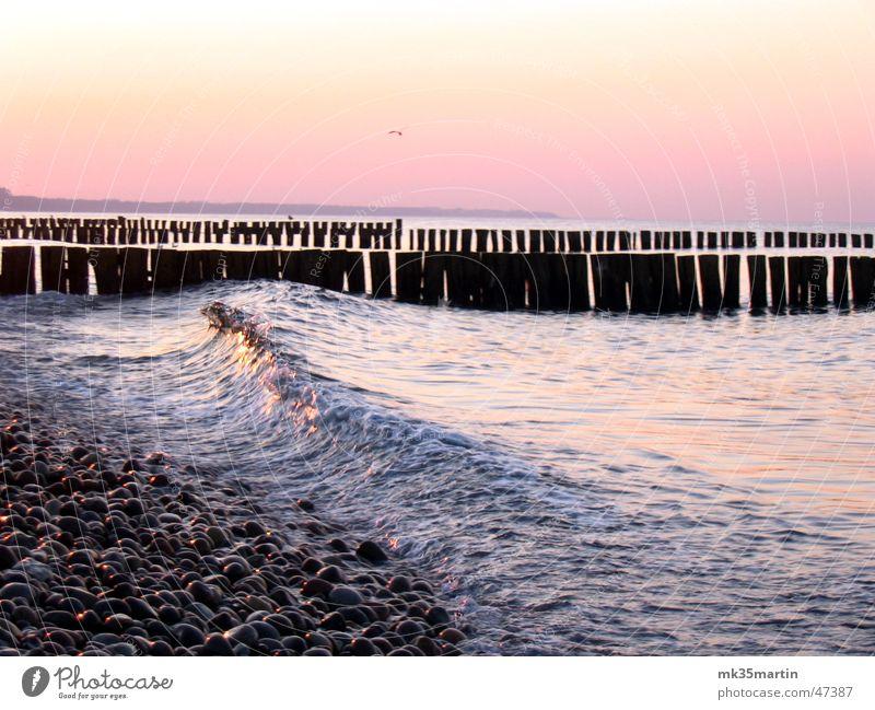 Die perfekte Welle Wasser Meer Vogel Wellen Romantik Ostsee Möwe spät Buhne