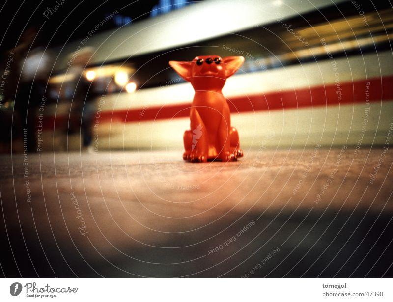 my Moyshe Ferien & Urlaub & Reisen Bahnhof Tourist Schnellzug Bahnsteig Texas Chihuahua Desert Spielzeughund