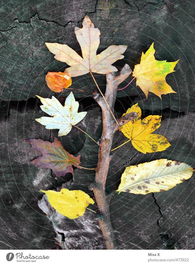 Herbstbaum Freizeit & Hobby Basteln Baum Blatt mehrfarbig gelb Herbstfärbung Herbstlaub herbstlich Herbstwald Ahornblatt Baumstamm Ast Bastelmaterial Natur