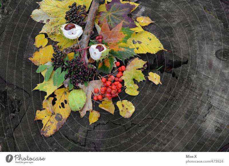 Herbst Frucht Basteln Baum Blatt mehrfarbig Herbstlaub herbstlich Herbstfärbung Herbstwald Baumfrucht Kastanie Holunderbeeren Vogelbeeren Bastelmaterial