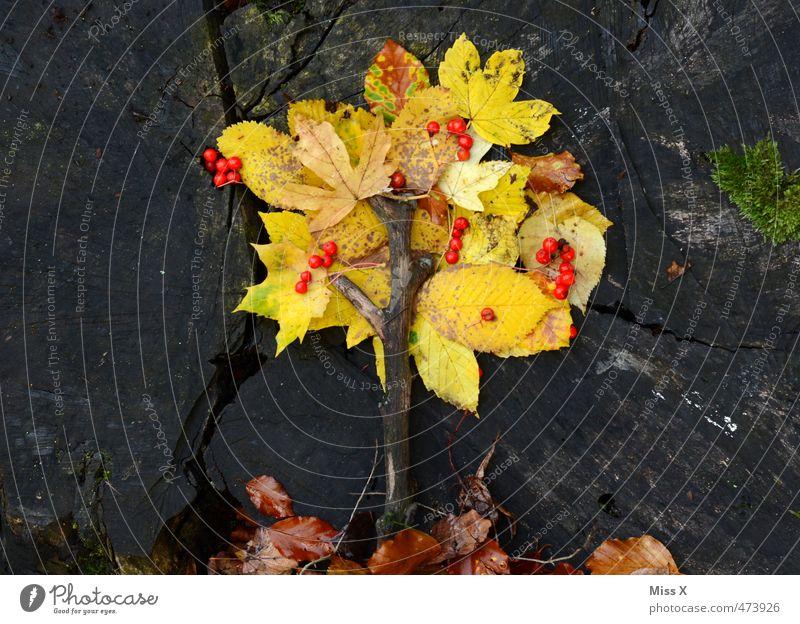 Bäumchen Basteln Herbst Baum Blatt mehrfarbig gelb Kreativität Herbstlaub Bastelmaterial Baumstamm Ast Zweige u. Äste Miniatur Herbstfärbung Herbstwald