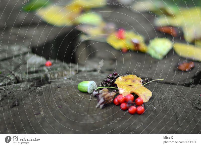 Herbstsammlung Lebensmittel Frucht Freizeit & Hobby Basteln Pflanze Baum Blatt Park Wald mehrfarbig Sammlung Eicheln Baumstamm Vogelbeeren Holunderbeeren