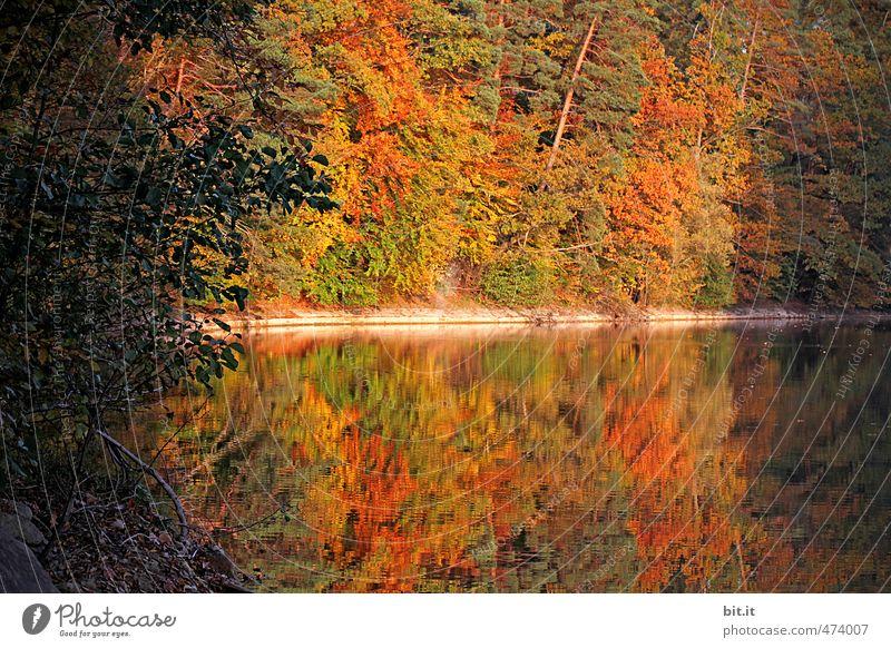 halbe sachen | aus der Mitte enspringt der See Natur Ferien & Urlaub & Reisen Baum Erholung Landschaft ruhig Blatt gelb Umwelt Herbst Glück braun Stimmung gold